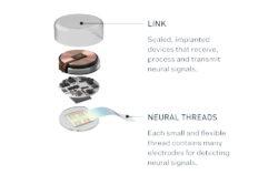 neuralink n1 link elon musk abe eksperiment pong / newz.dk